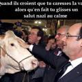 Heil vache