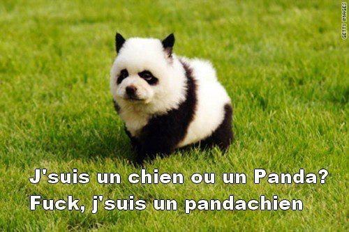 pandachien - meme