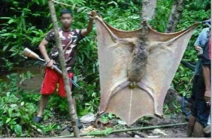murciélago gigante de filipinas - meme