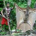 murciélago gigante de filipinas