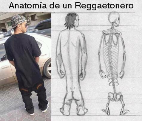 anatomía del reggaetonero - meme