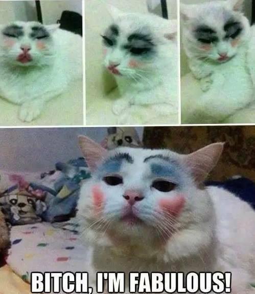 el gato mas sensual que vi - meme