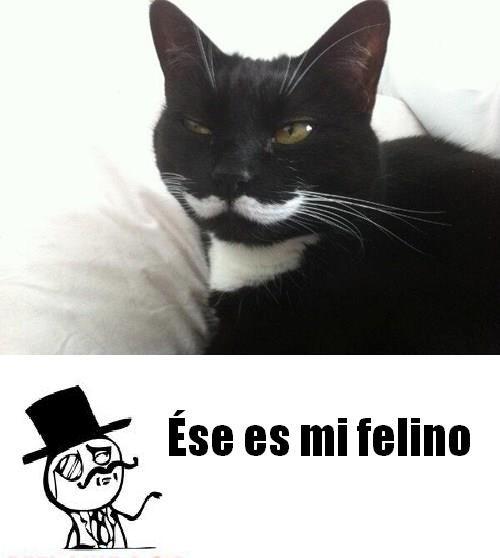 Que gato mas elegante - meme
