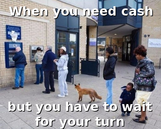 The fox needs money - meme