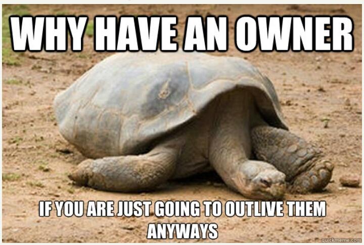 Sad Turtle is sad :( - meme