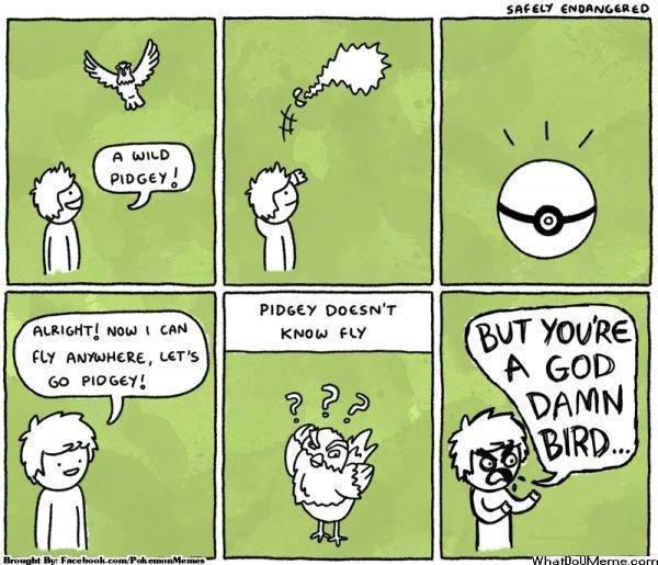 STUPID PIDGEY!!!!! - meme