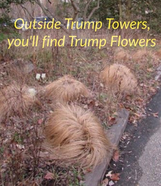 Trump Flowers - meme