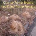 Trump Flowers
