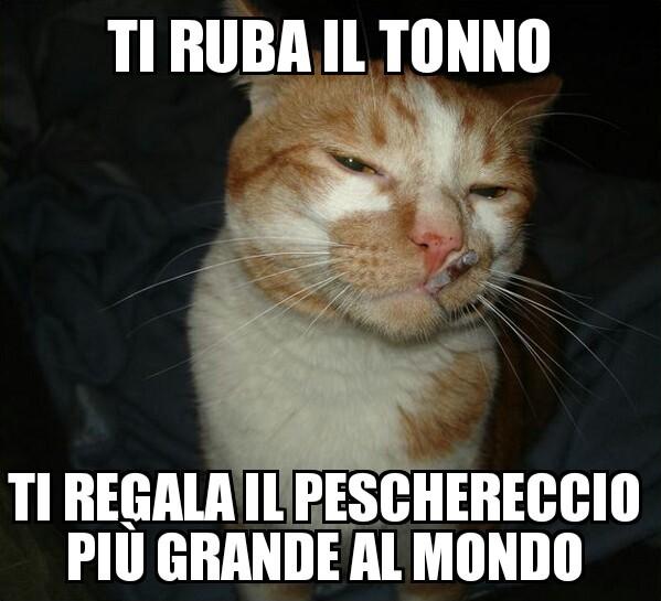 gattomane - meme