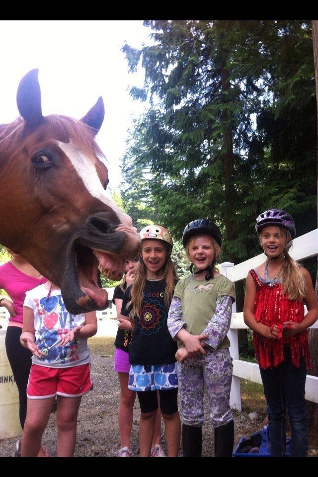 photobomb lvl : Horse - meme