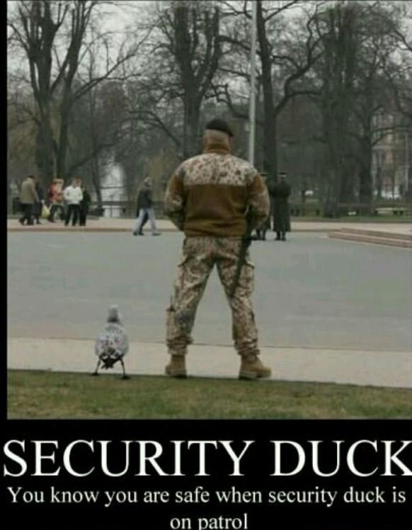 security duck - meme