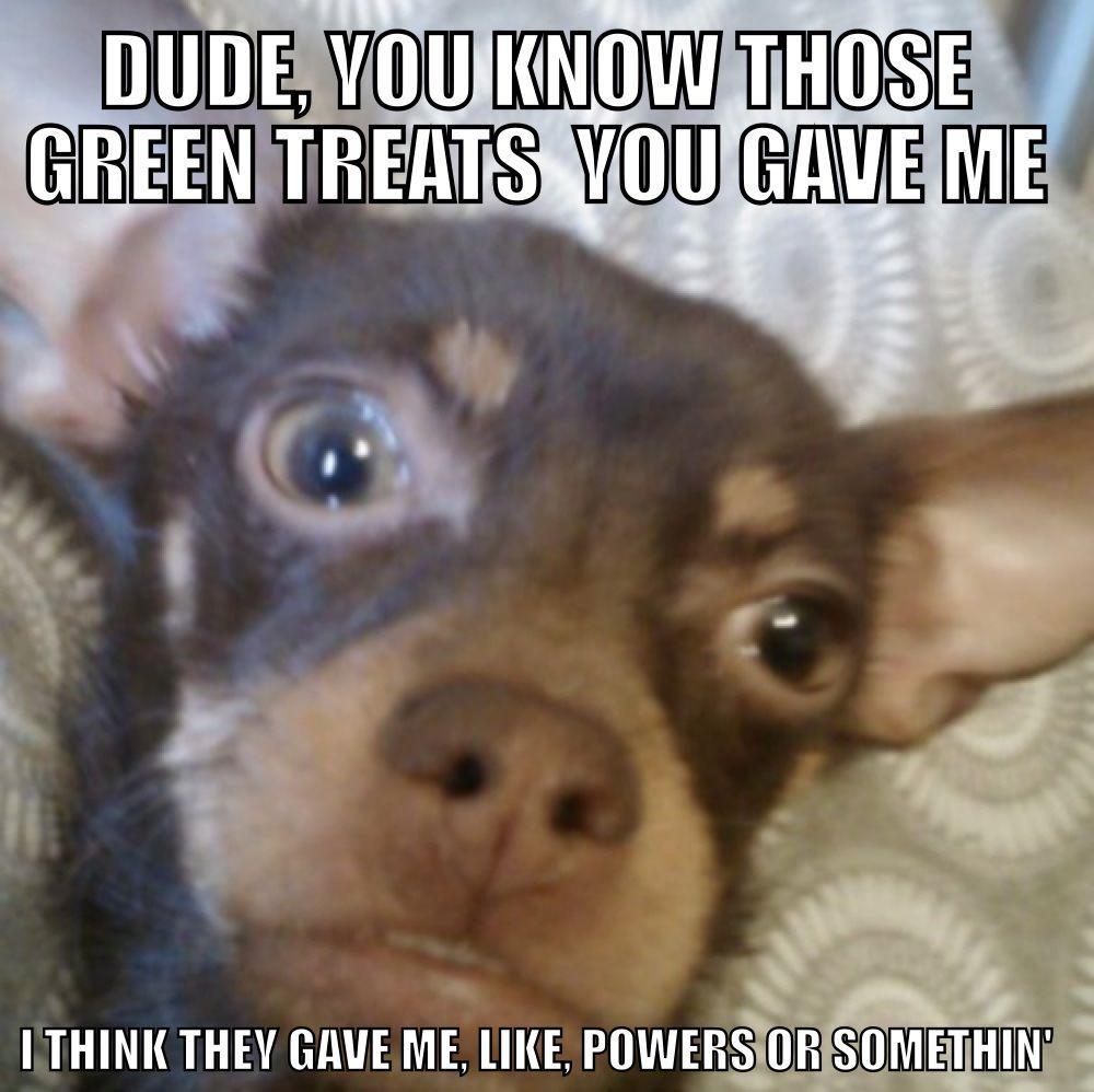 My dog - meme