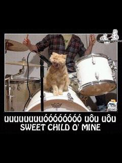 esse gato tem mais bom gosto q mta gnt - meme