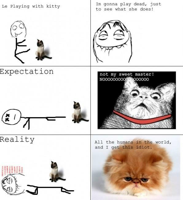 average cat - meme