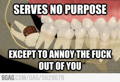 51d1a24669b71 douchebag wisdom tooth meme by jzoo416 ) memedroid