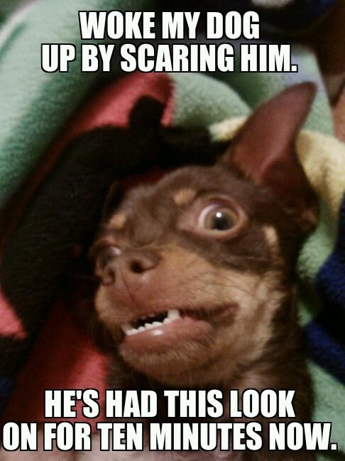 kinda scared - meme