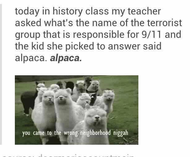 alpaca - meme