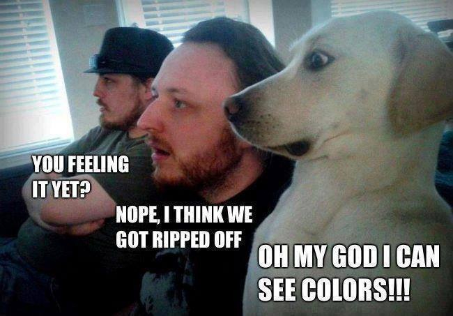 51c66ab96cfab dog is high af' meme by el_pekas_69 ) memedroid