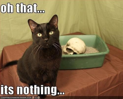 My cat - meme