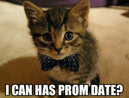 prom kitty:3 - meme