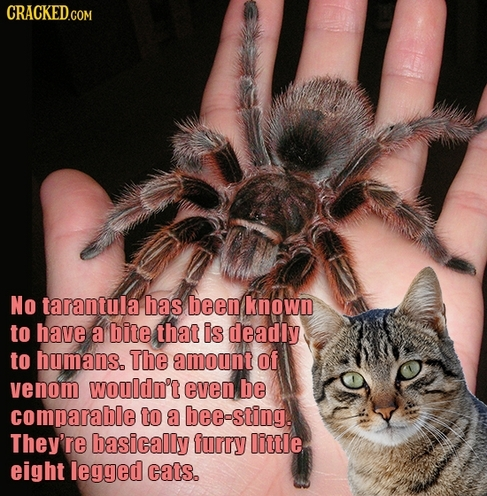 See? Spiders are cool. - meme