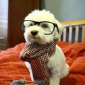 Perro hipster!