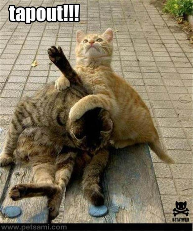 mma cats - meme