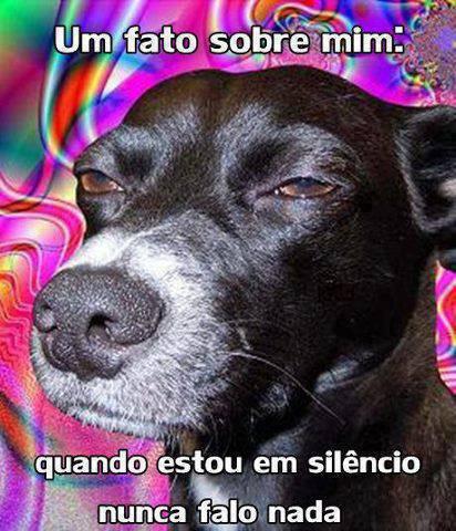 Cão  - meme