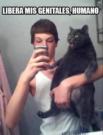 51fdaeb3e7bd0 es porque soy negro? meme by luisapattzrob ) memedroid,Cat Negro Meme
