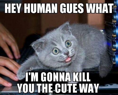 the cute way - meme
