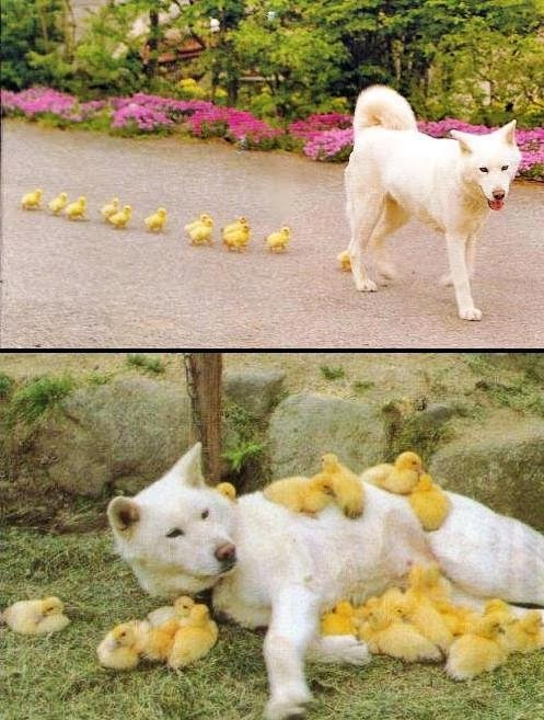 Doggy gets all the chicks - meme