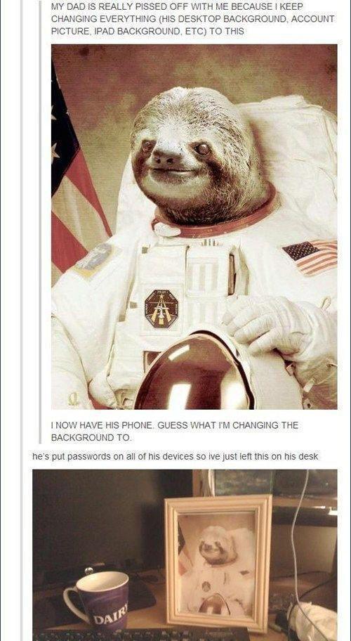 sloths - meme