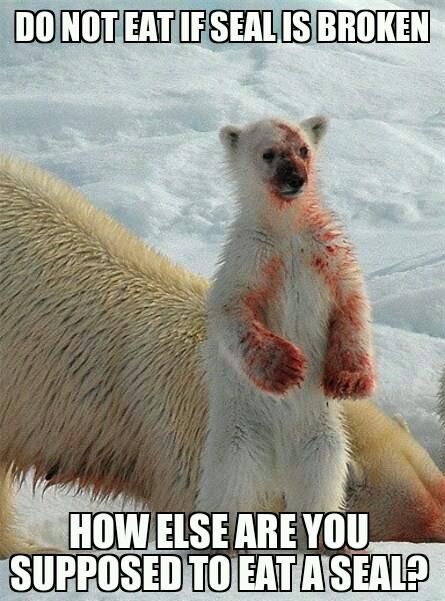 polar bear - meme