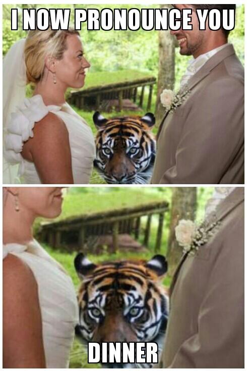 tigerbomb! - meme