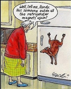 Bad Dog! - meme