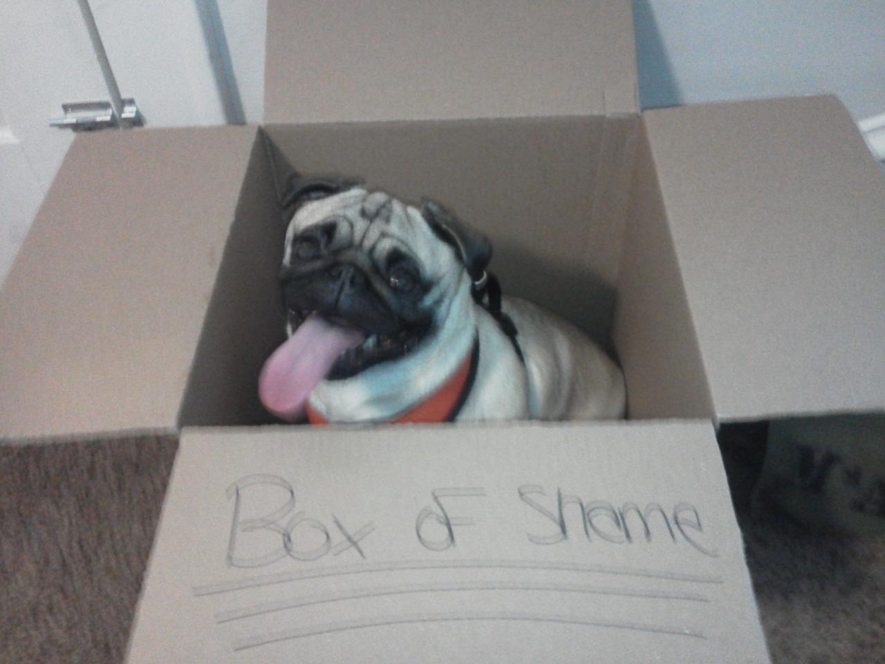Bad pug. - meme
