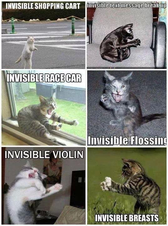 creative cats - meme