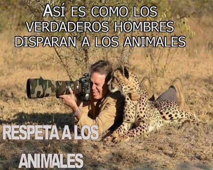 Respeto a los animales - meme