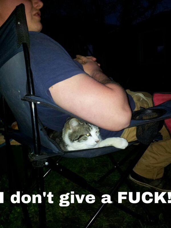 Cats are so Hardcore - meme