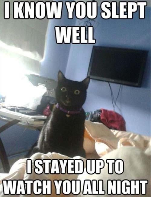 Creepy cat - meme