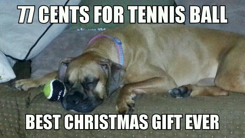 Dog Christmas Meme.Christmas Dog Meme By Lowirish Memedroid