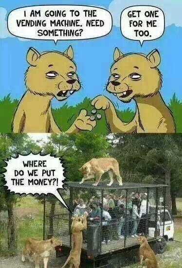 cub party - meme