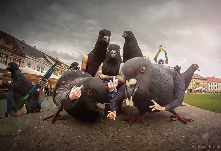 Image result for pigeons album cover