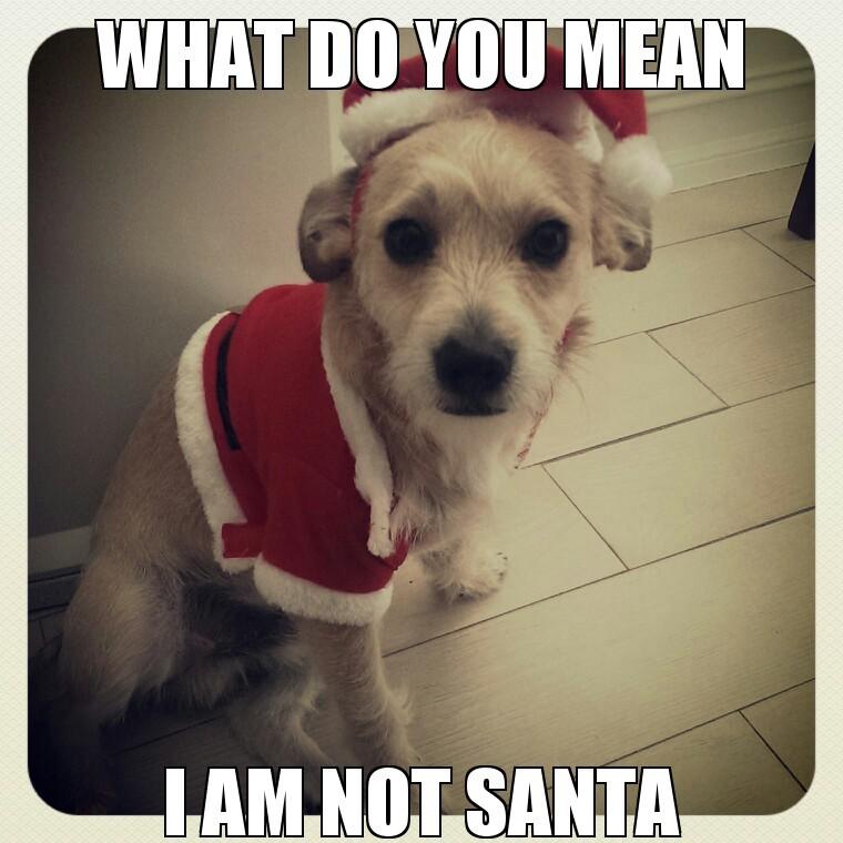 Doggie - meme