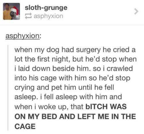 Bad guy dog - meme