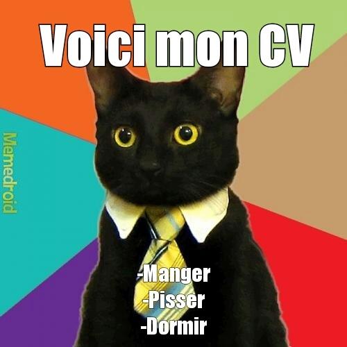CV du chat ... - meme