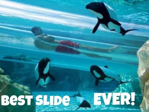 Best. Slide. Ever! - meme
