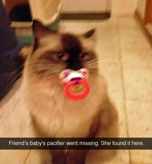 Meow ^.^ - meme