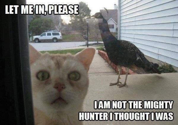 Let me in....please?? - meme