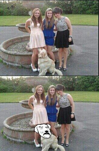 clever dog.. - meme